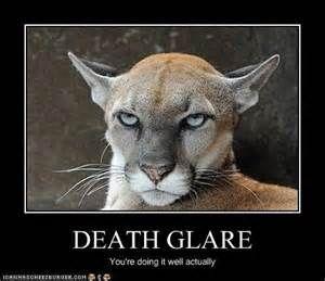 Angry cougar close up