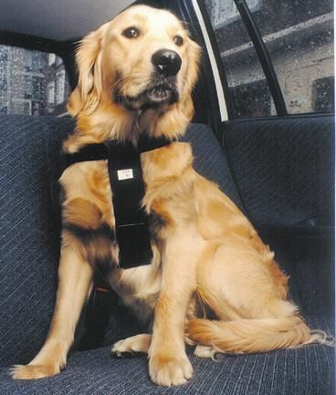 Dieren Discount4pets Nl Adori Honden Autoharnas Gordel De Adori Autoharnas Gordel Zorgt Ervoor Dat Je Je Hond Veilig Honden Hondenaccessoires Dierenwinkel