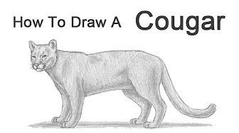 How To Draw A Mountain Lion Fur Texture Animal Drawings Lion