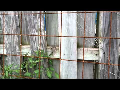 Wire Mesh Trellis Rusty For Veggies Remesh Metal Trellisses Are Trendy I Saw A At Armstrong Today That Was 100 Or 200