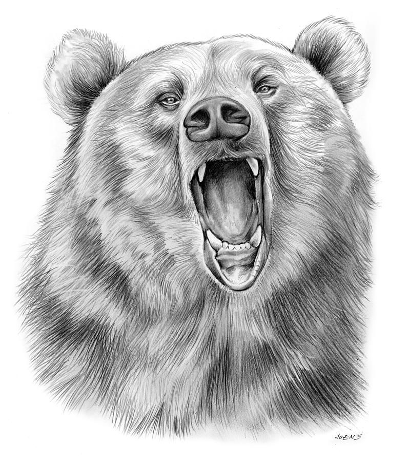 Bear Drawing Growling Bear By Greg Joens Dessin Ours Ours