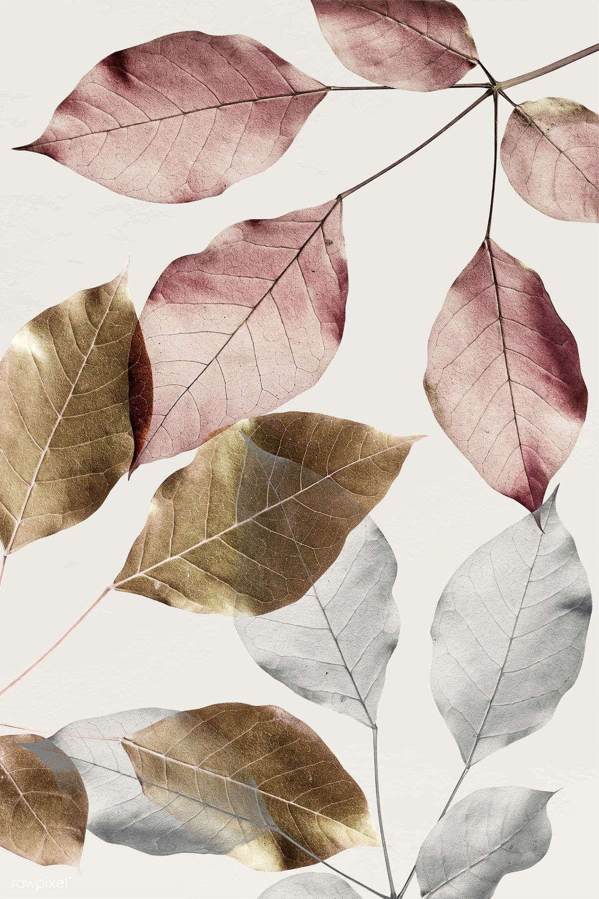 Download premium illustration of Silver leaves with gold and pink leaves