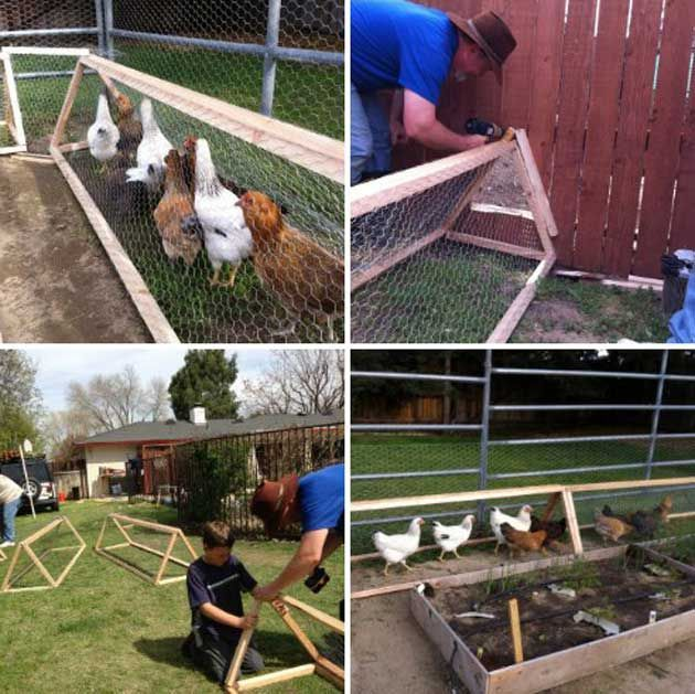 Raising Chickens In Your Backyard Or Garden Is Great Idea