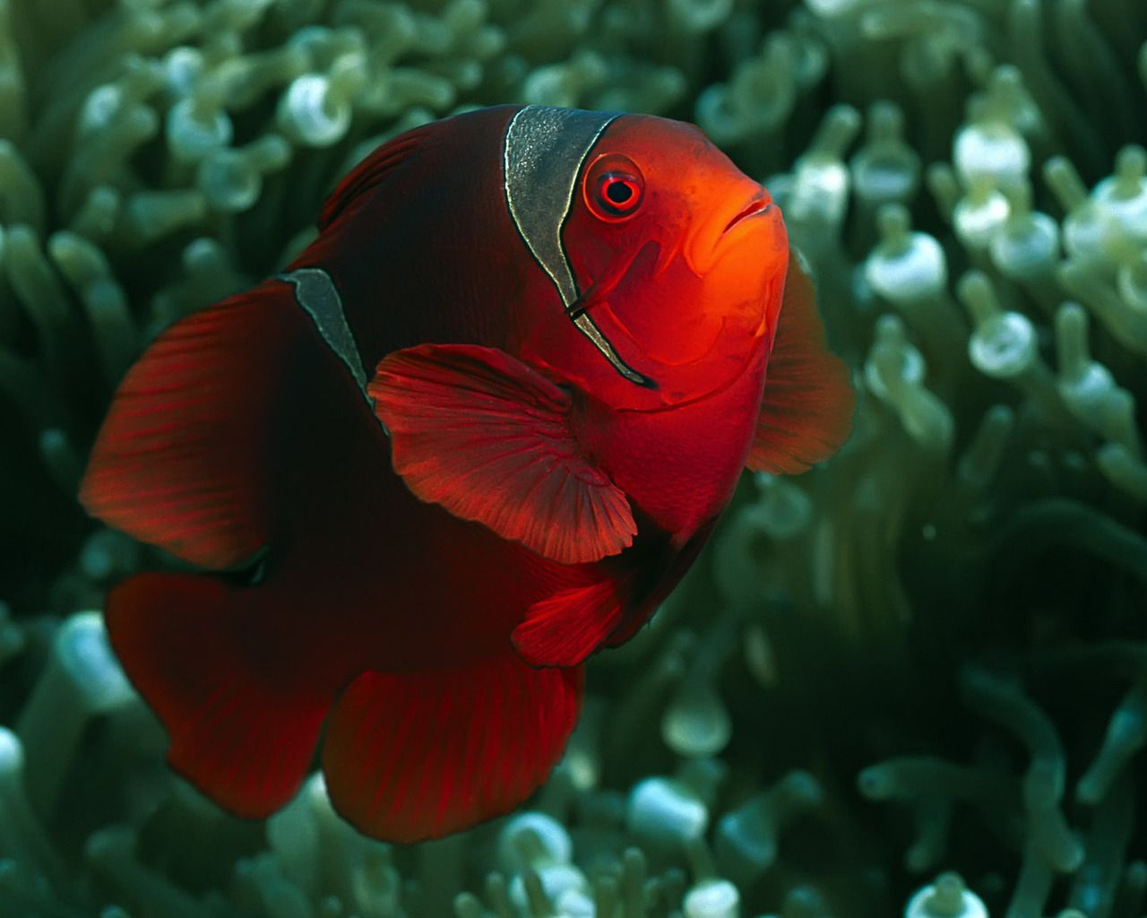 Animal Fish Wallpaper/Background 1280 x 1024 - Id: 236210 ...