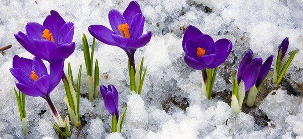 10 Best Garden Plants To Grow In The Winter