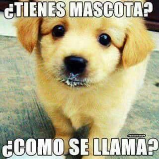 Meme Perritos Perro Labrador Bebe Perros Bonitos Perros