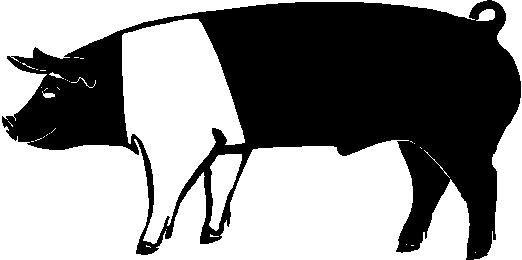 show-pig-clip-art-673935.jpg (522×260) | 4-H | Pinterest
