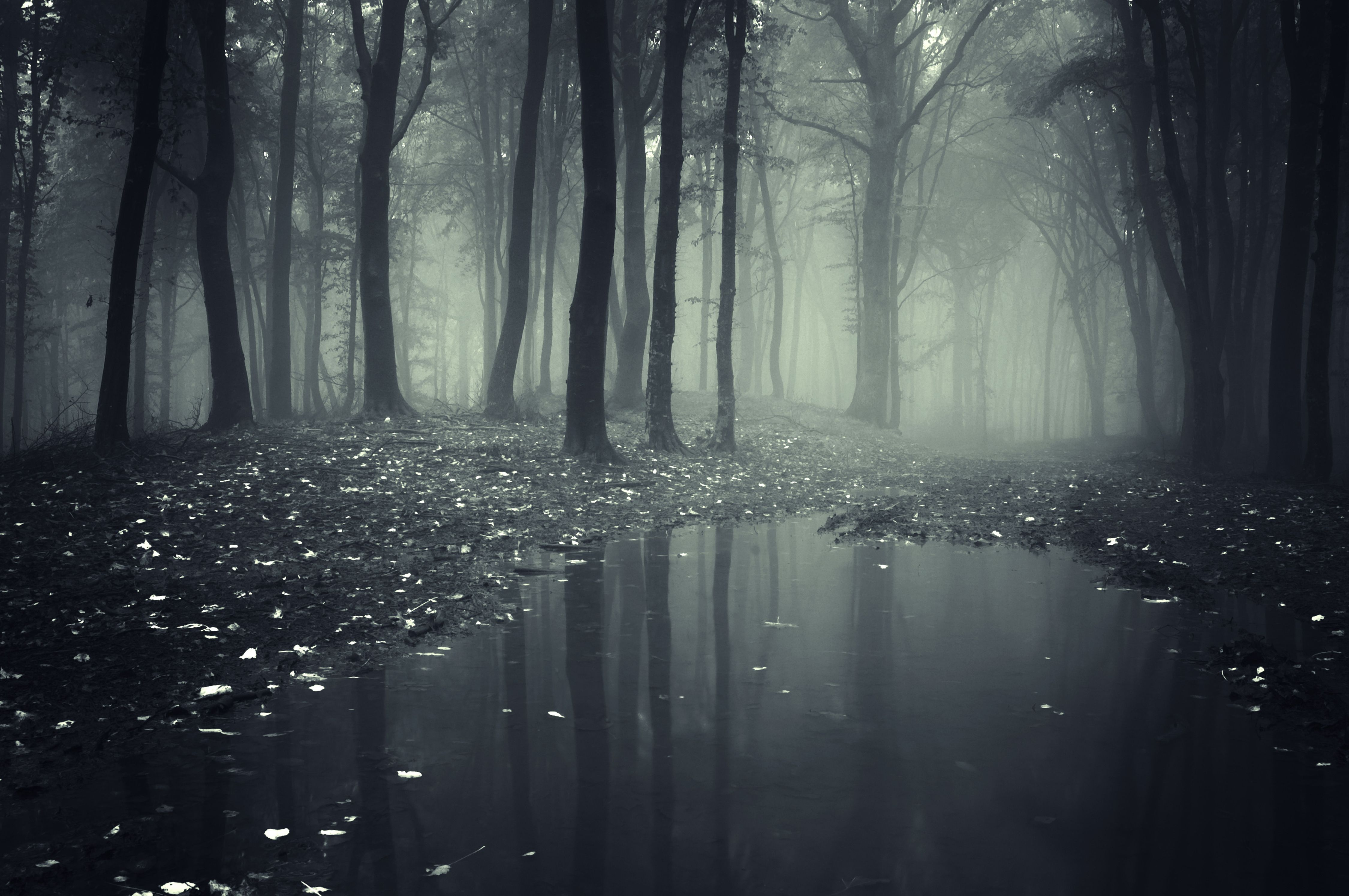 Creepy Landscape Wallpaper Phone Forest Wallpaper Landscape Wallpaper Dark Wallpaper