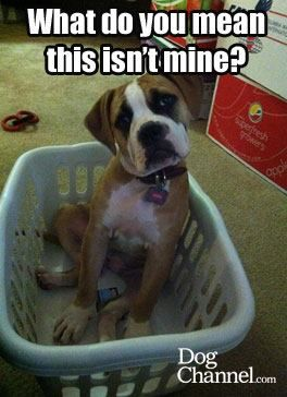 12cc474f9a5170a85eb7e9386f906443 what do you mean this isn't mine? dog fancy dog memes