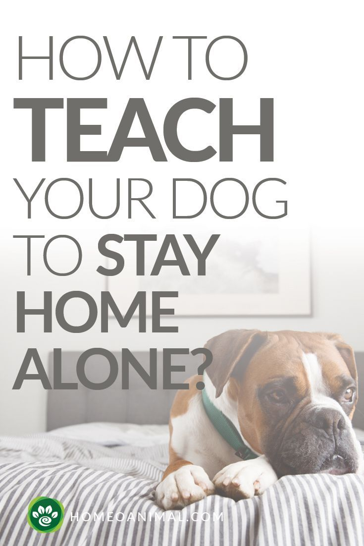 How To Teach Your Dog To Stay Home Alone Dog Clicker Training