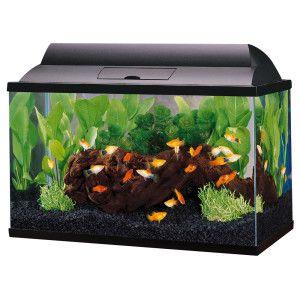 Top fin 5 5 gallon aquarium starter kit petsmart 5 for 5 gal fish tank