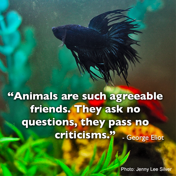 Fish Motivational Quotes: A Pet Is Always There To Listen
