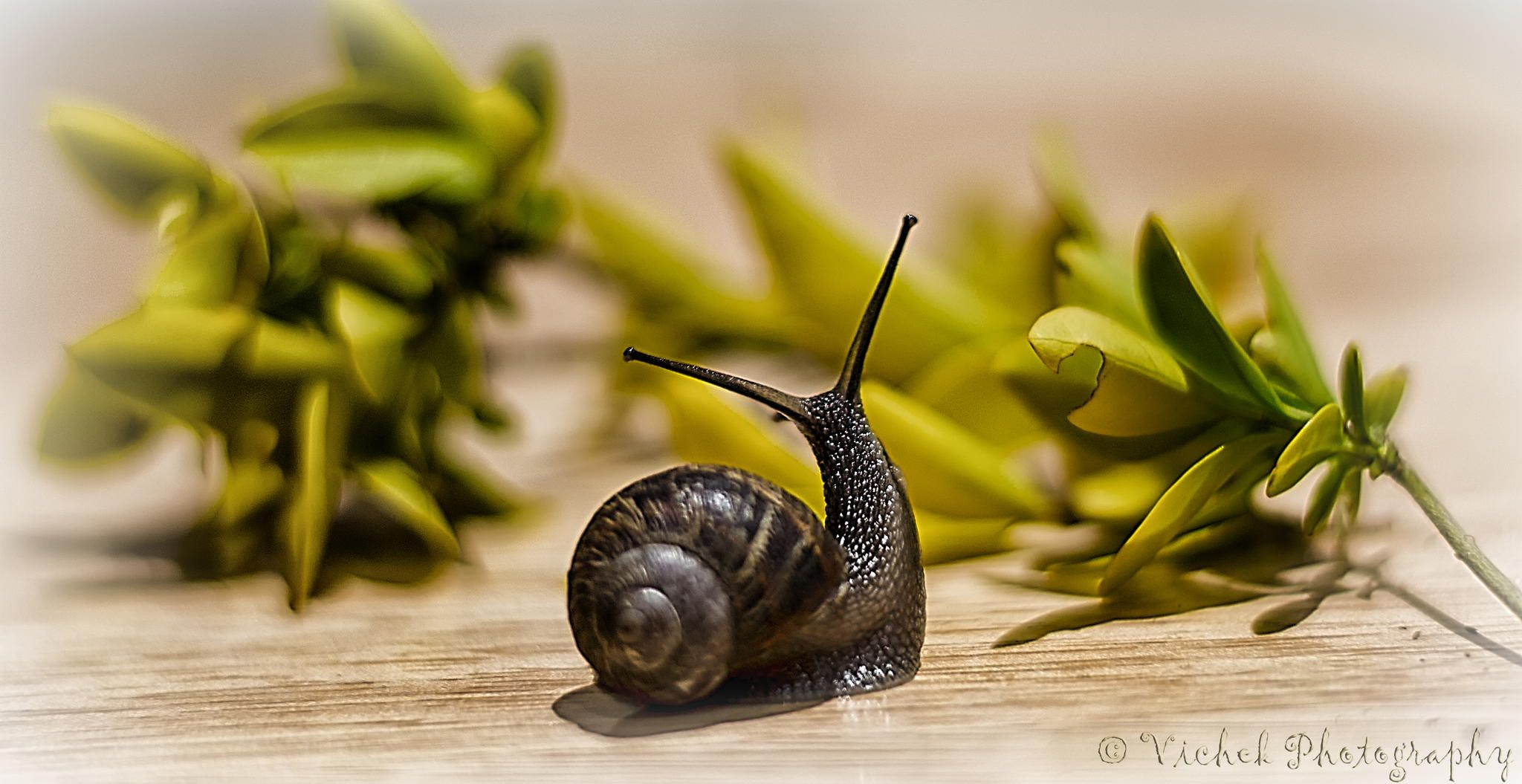 Stenly the Snail by Viktor Stefanov on 500px