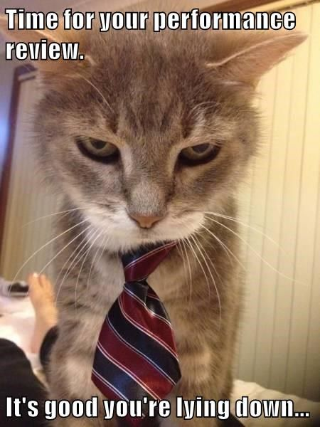 Hr Cat Delivers The Reviews Animal Humour Cats Funny Cats