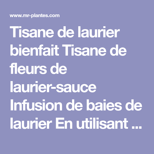 Infusion de laurier, feuilles, fleurs & baies - Laurier..
