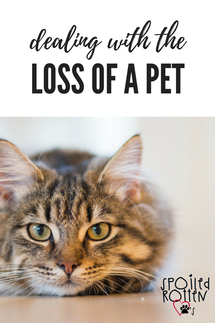 Dealing With The Loss Of A Pet Spoiled Rotten Paws Pet Grief Death Of A Pet Dog Grief