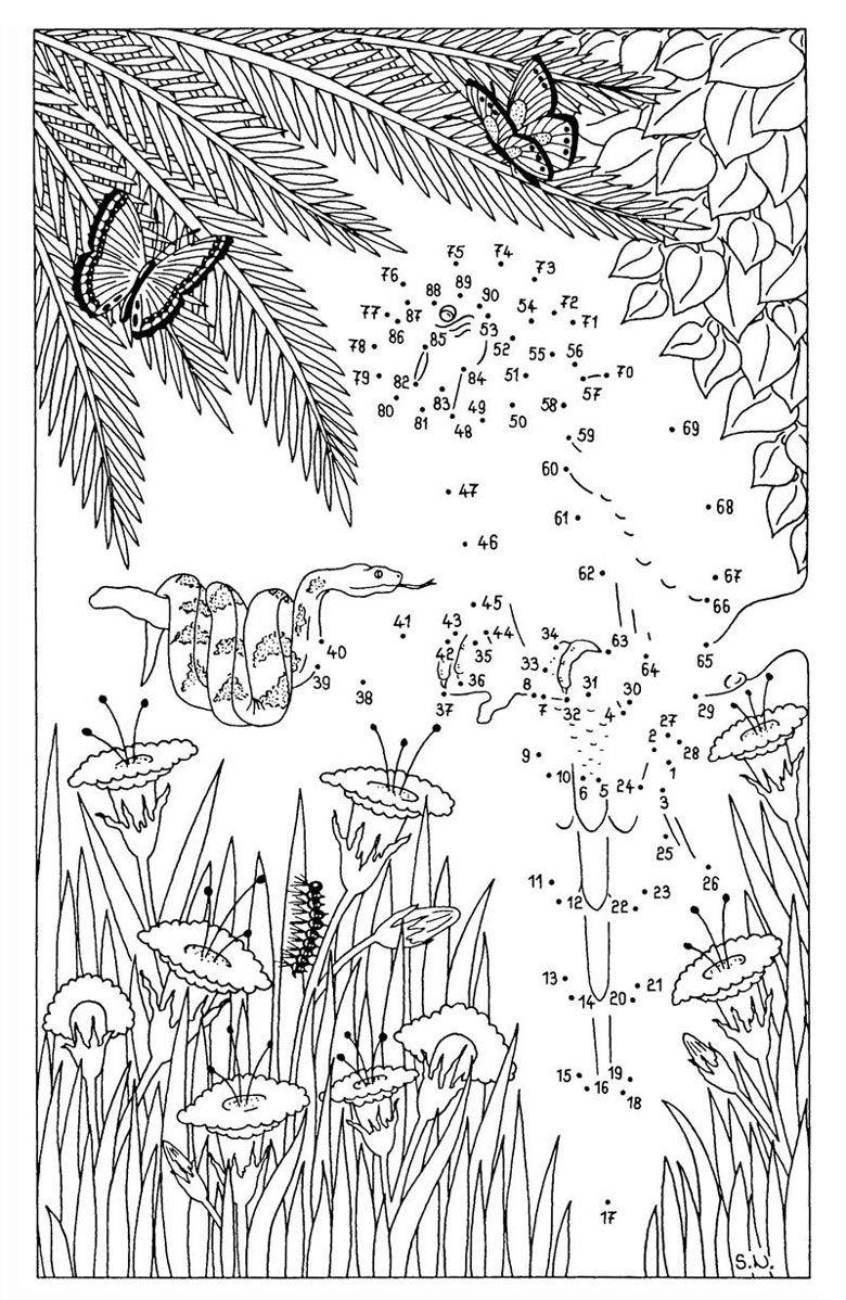 malen-nach-zahlen-schlange-und-papagei.jpg (780×1198) | color by ...