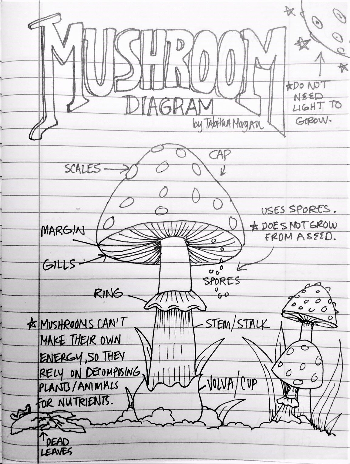 My Personal Artwork Above Handout Parts Of A Mushroom Color Sheet Stuffed Mushrooms Parts Of A Mushroom Primary School Activities [ 1530 x 1154 Pixel ]