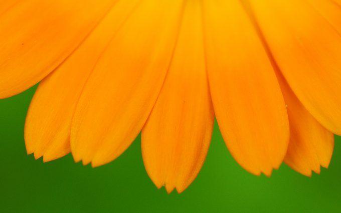 Yellow Petal Flower Wallpaper 4K