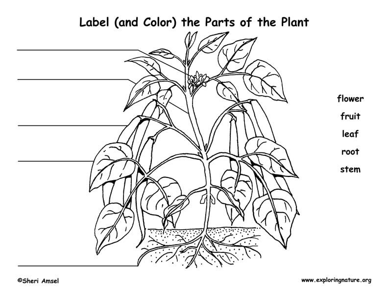 Awesome Ecology Worksheet Kindergarten Science Worksheets Botany ...