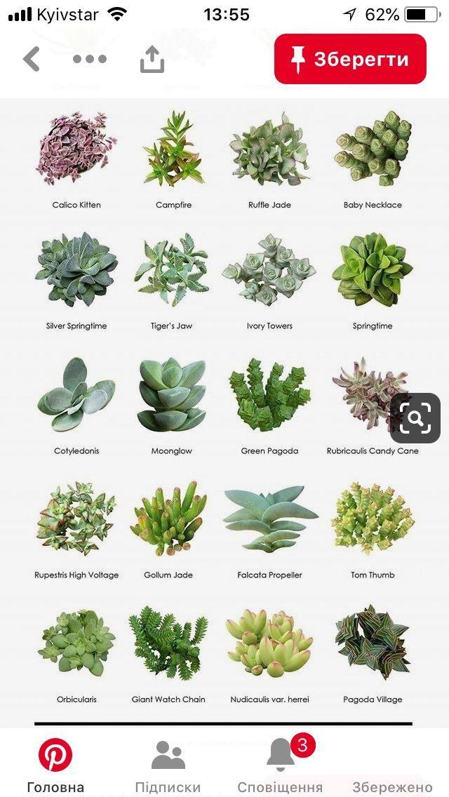 Best 11 Bulk Succulents Flat Of 30 2 25 Mixed Varieties Beach
