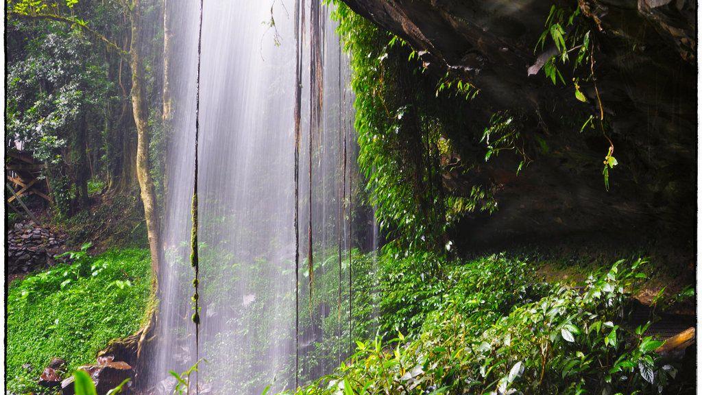 Curtain Falls Dorrigo National Park Nsw Australia Campervan Travel National Parks Australia Travel Beautiful Places