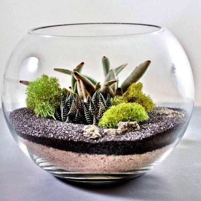 sand terrarium garden terrarium succulent terrarium micro garden