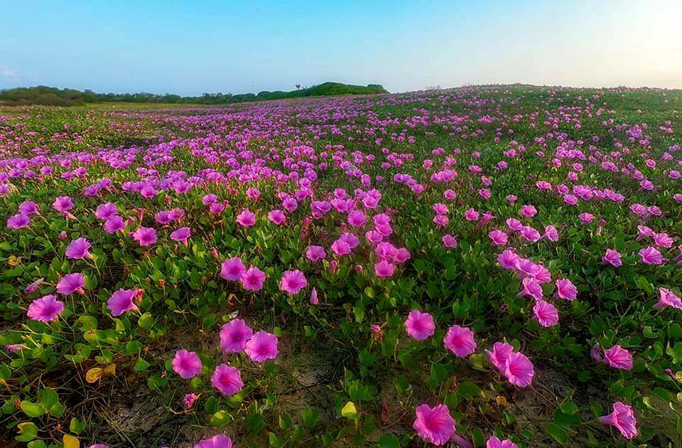flowers pinkflowers whatsappprofilepic whatsappDP