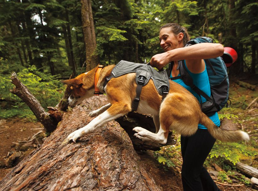 Web Master Harness Dog Harness Padded Dog Harness Hiking Dogs