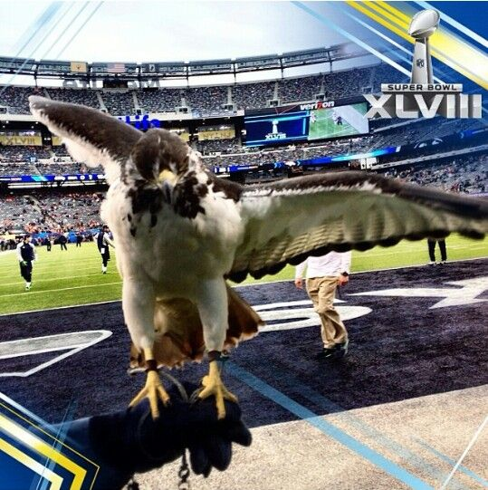 The newest member of the Seahawks family is Taima the Hawk.