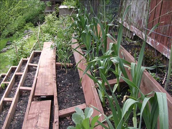 12d53f2199ef1b3111f4e79e54dd6813 - What Is The Purpose Of Terrace Gardening