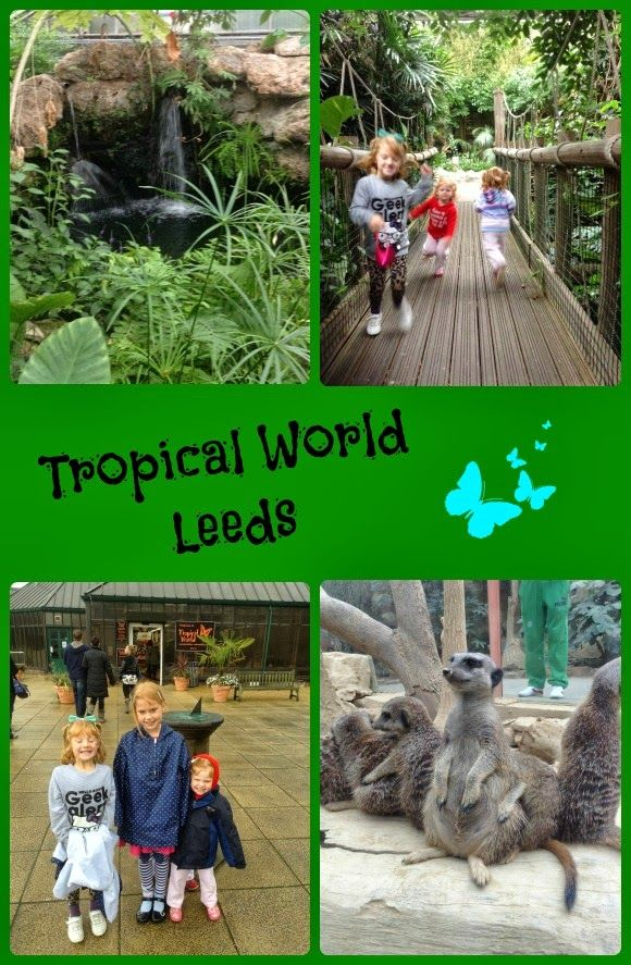 Tropical World Leeds West Yorkshire Days Out With Kids Days Out With Toddlers Holidays In England