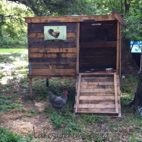 DIY Chicken Coop from pallets and scrapes