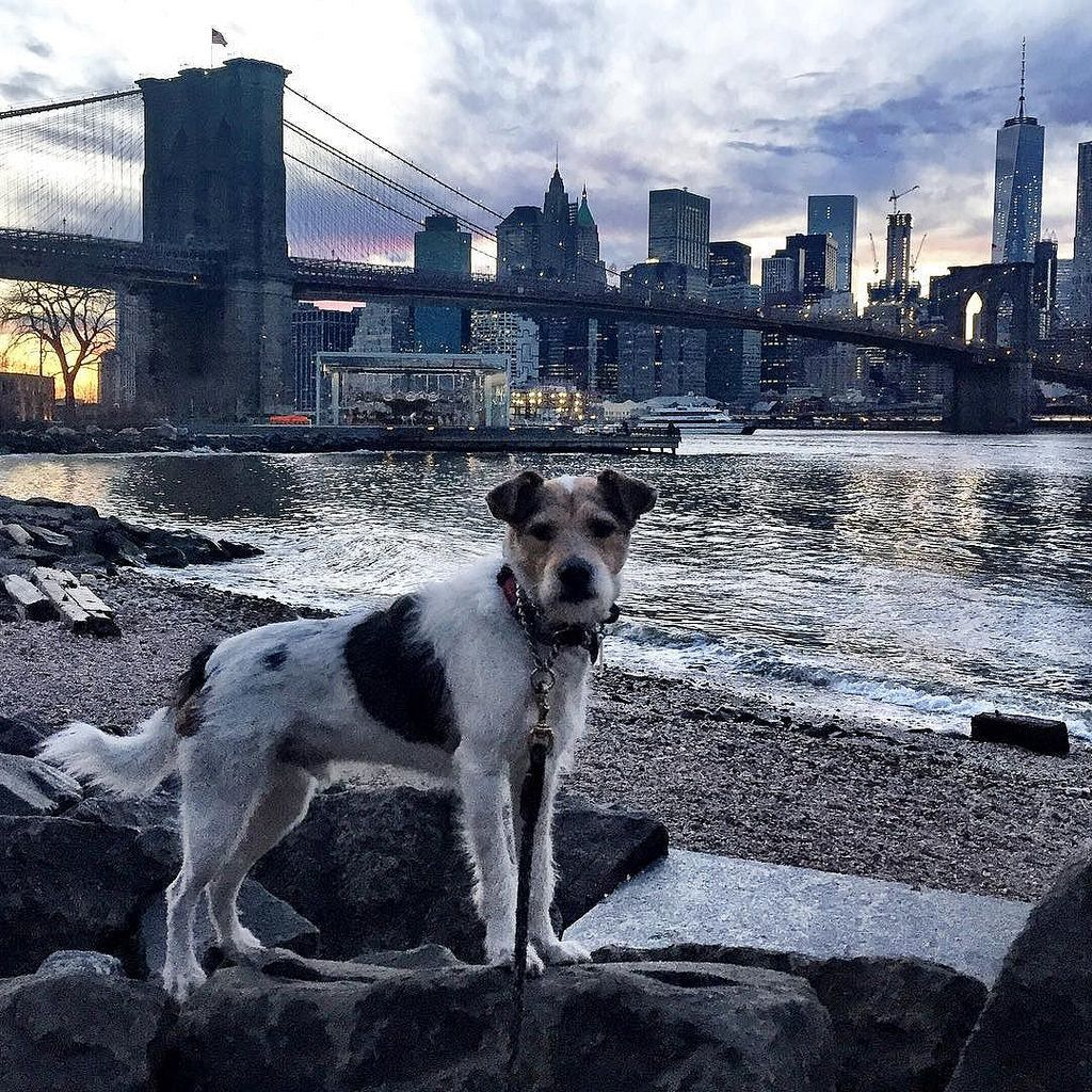 A Shot Of The Skyline Last Night Iloveny Mascotas