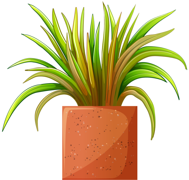 Clip Art Of Beautiful Plants For The Spring Garden Plant 3
