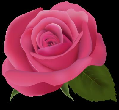 Pink Rose Transparent Background Pink Rose Png Rose Flowers