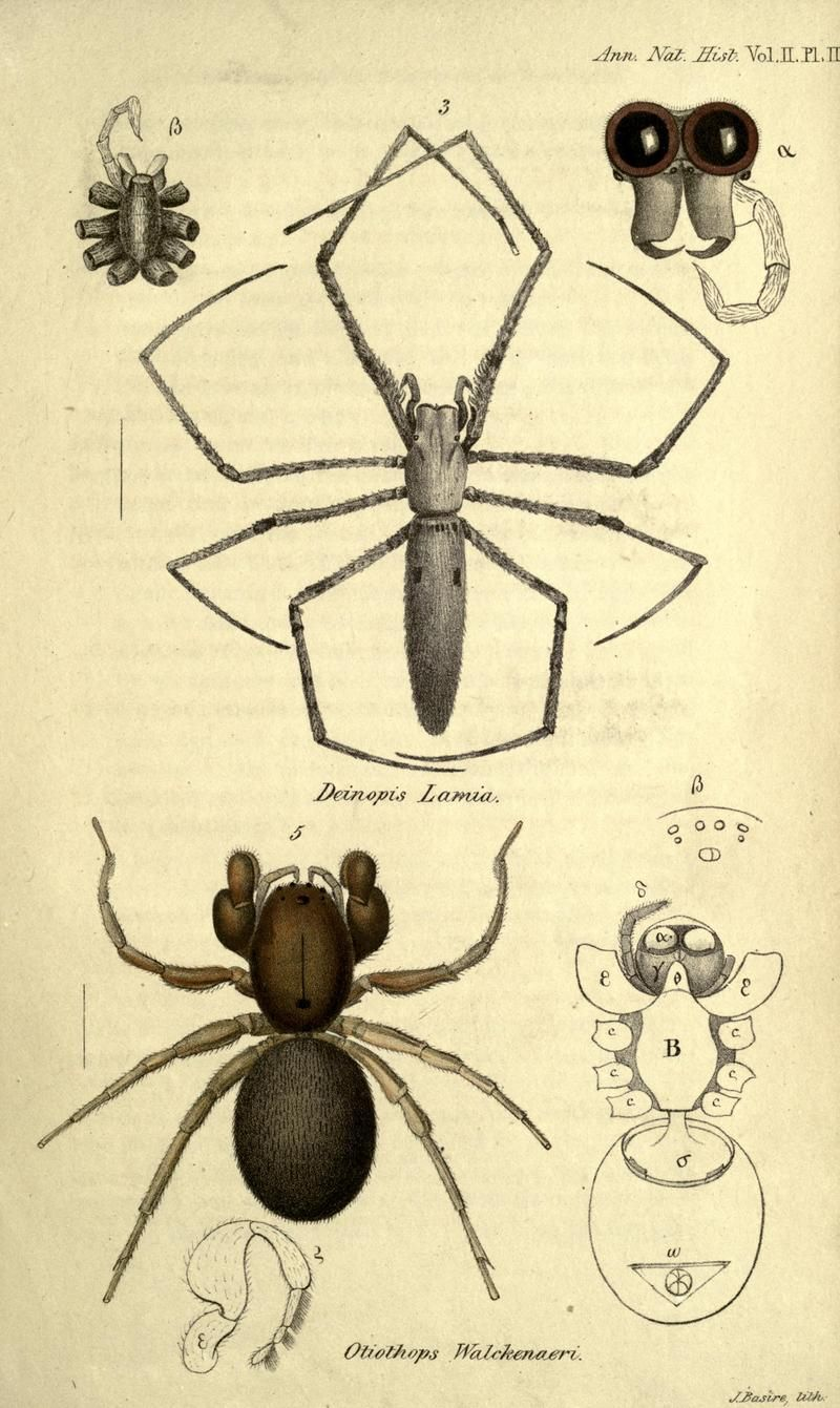 Arachnida, 1839 | aracnidos | Pinterest | Insectos, Animales ...