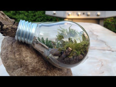 Do it yourself eternal terrarium in a light bulb diy bird house do it yourself eternal terrarium in a light bulb diy bird house https solutioingenieria Image collections