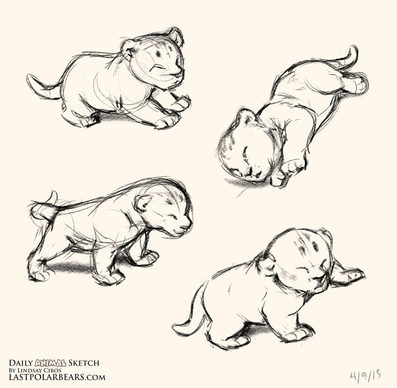 Daily Animal Sketch – Lion Cubs – Last of the Polar Bears