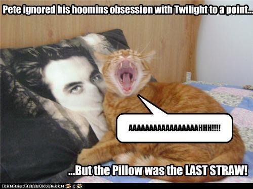 This Cat Is Team Anti Twilight Twilight Funny Funny Google Searches Twilight