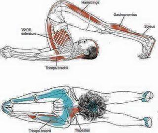 pinm saeed on stretch  easy yoga workouts yoga