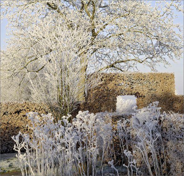 Garten Im Winter der garten im winter frozen tears of the sky