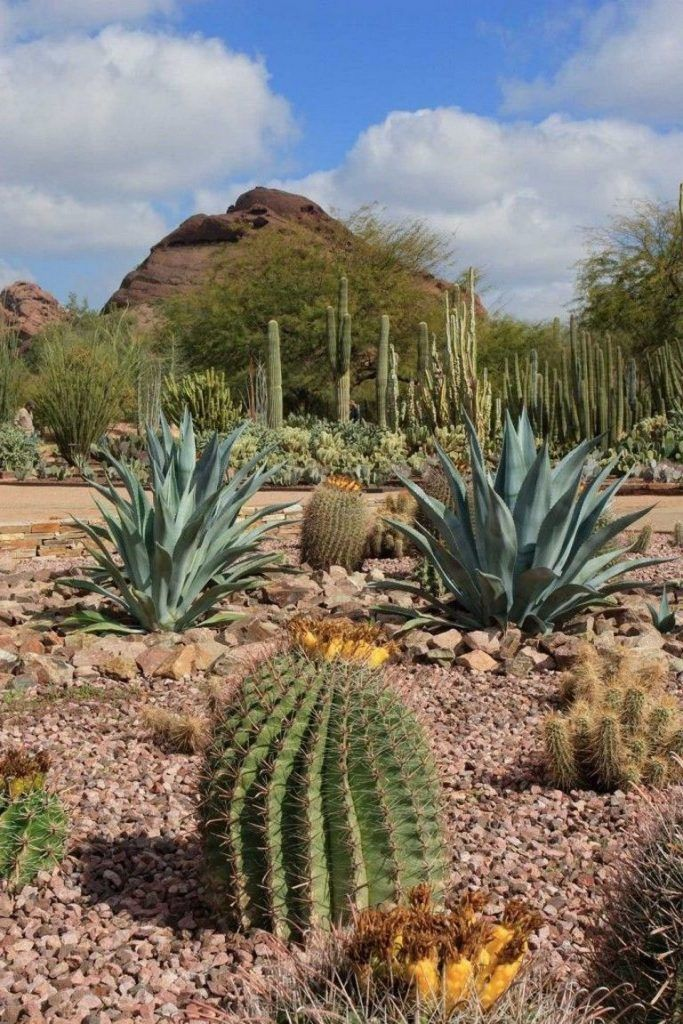 Nice Desert Botanical Garden Plant Sale To Refresh Your Home Desert Botanical Garden Desert Garden Desert Botanical Garden Phoenix