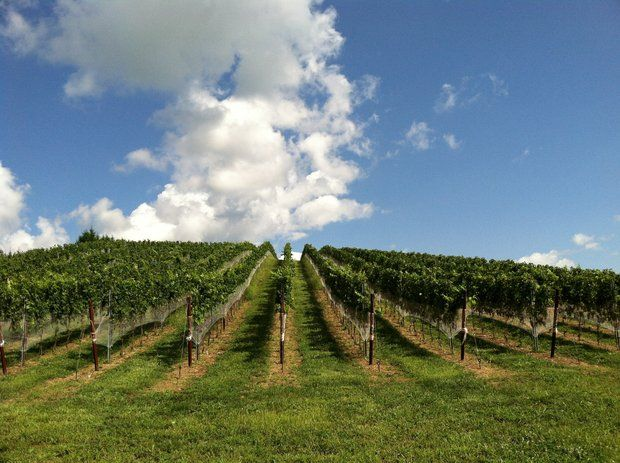 In addition to wine, the vineyard also offers mead. Catoctin Breeze Vineyard's tasting room is open on the weekend (and by appointment during the week).     Catoctin Breeze Vineyard   15010 Roddy Road, Thurmont  240-449-0677,  catoctinbreeze.com