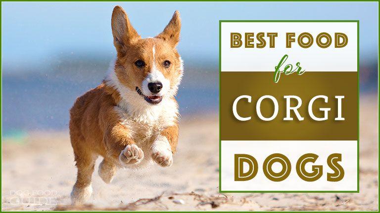 Best Dog Food For Corgis Top Puppy Adult 038 Senior