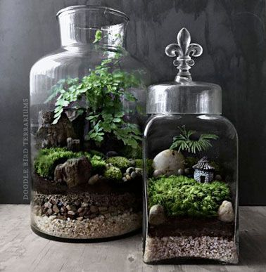 un terrarium en verre cristal avec une for t miniature terrarium pinterest terrarium les. Black Bedroom Furniture Sets. Home Design Ideas