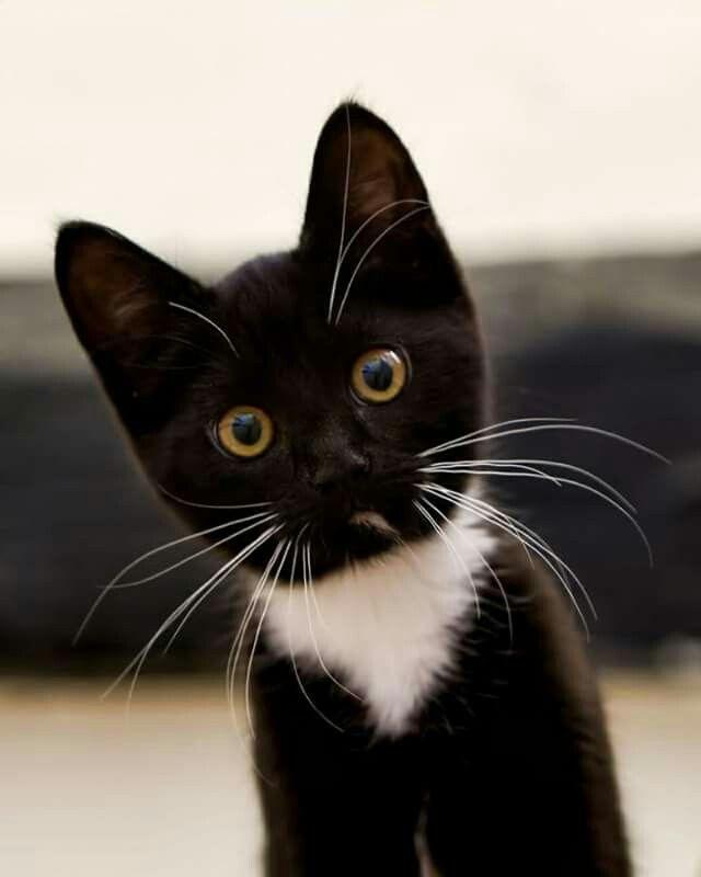 Cats Are Blessings Gatos Animais Bonitos E Gatos Brancos