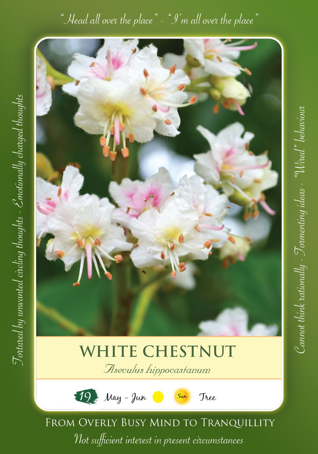 Bach Flower Remedy White Chestnut Toke Bach Flowers Remedies