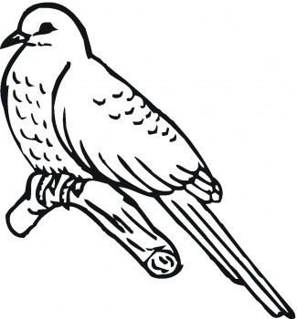 Cardinal Bird Printable Coloring Pages