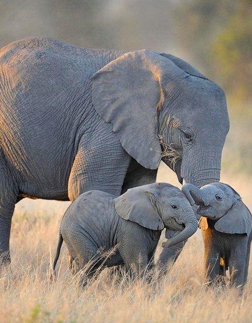 ternura de los elefantes bebé